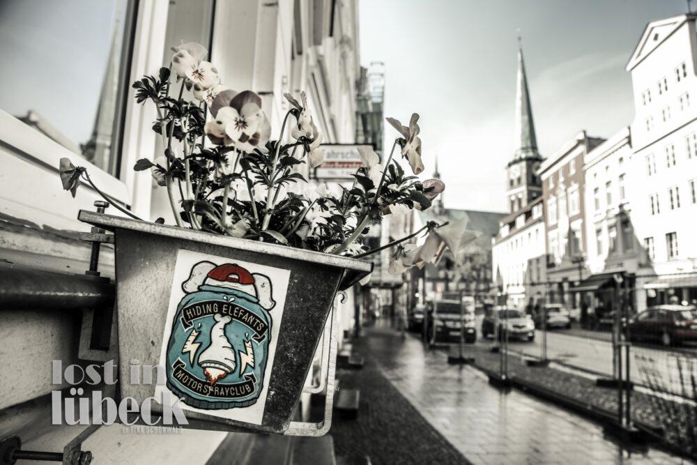 Große Burgstrasse Lübeck Blumenkasten mit Stiefmütterchen Blick die Strasse entlang